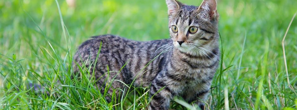Katzen-Freigänger Ernährung