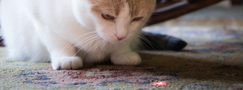 Header-Laser-Katze