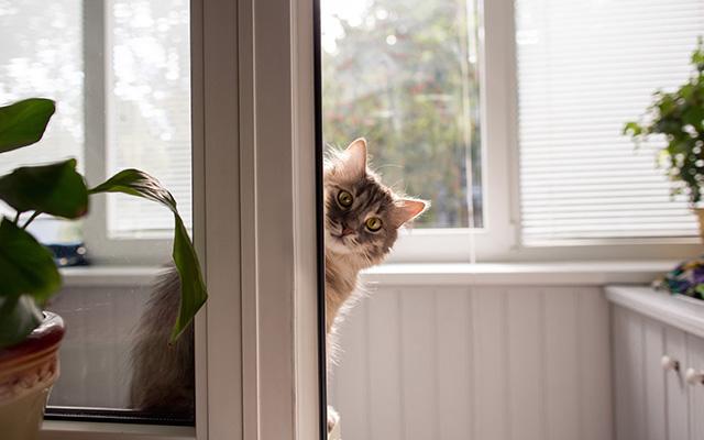 Katze-Kippfenster-Teaser