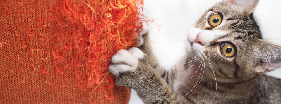 Katze-zerkratzt-Moebel