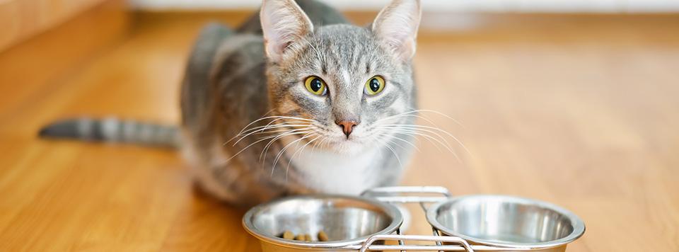 Katze-will-nicht-fressen-Header