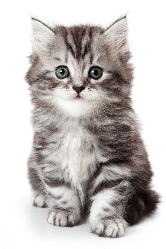 Leonardo Cat Food Kitten
