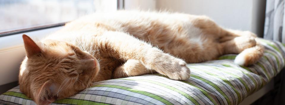 Header-Sommerhitze-Katze