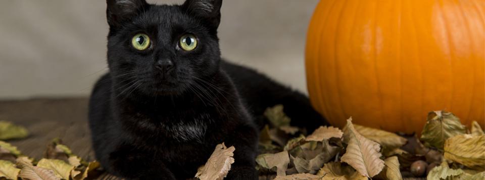 Halloween-mit-Katze