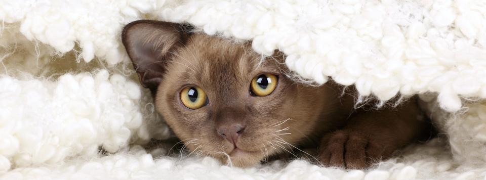 Silvester-mit-Katze