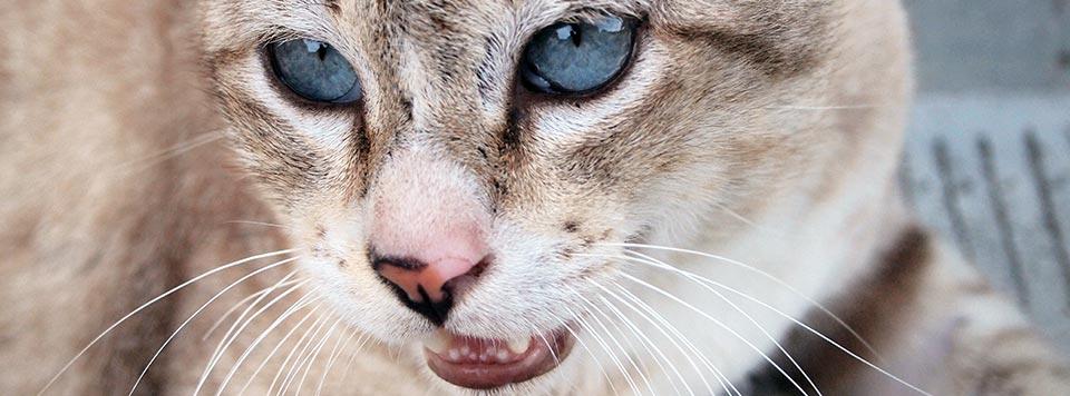Header-Katze-Hechelt