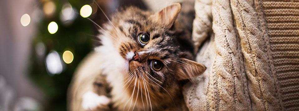Header-Weihnachten-mit-Katze
