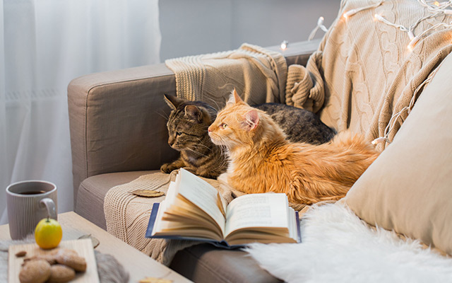 Teaser-Katze-zusammenführen