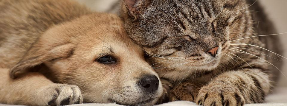 Hund-und-Katze-aneinander-gewoehnt