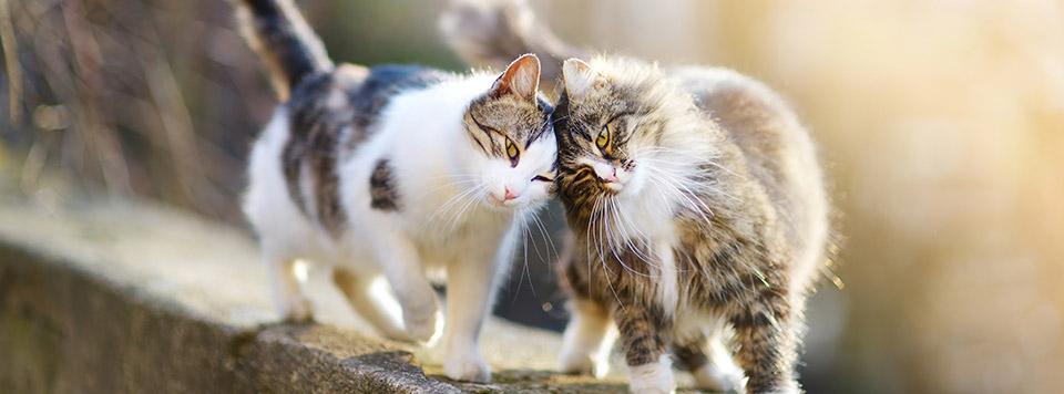 Header-Katzensprache