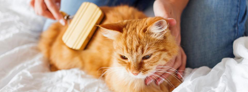 Fellpflege-bei-Katzen