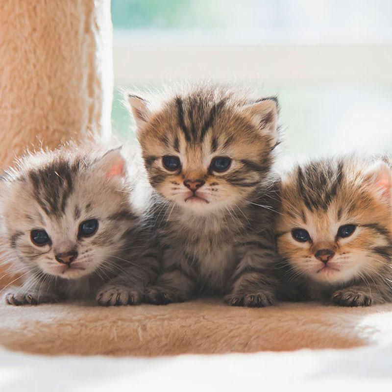 Kittenwelt