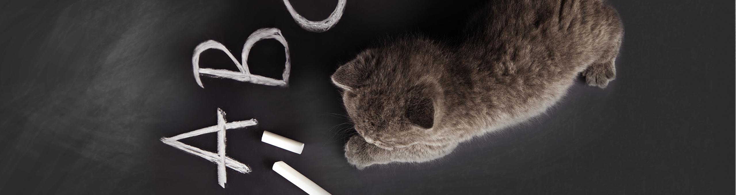 Kitten Namen